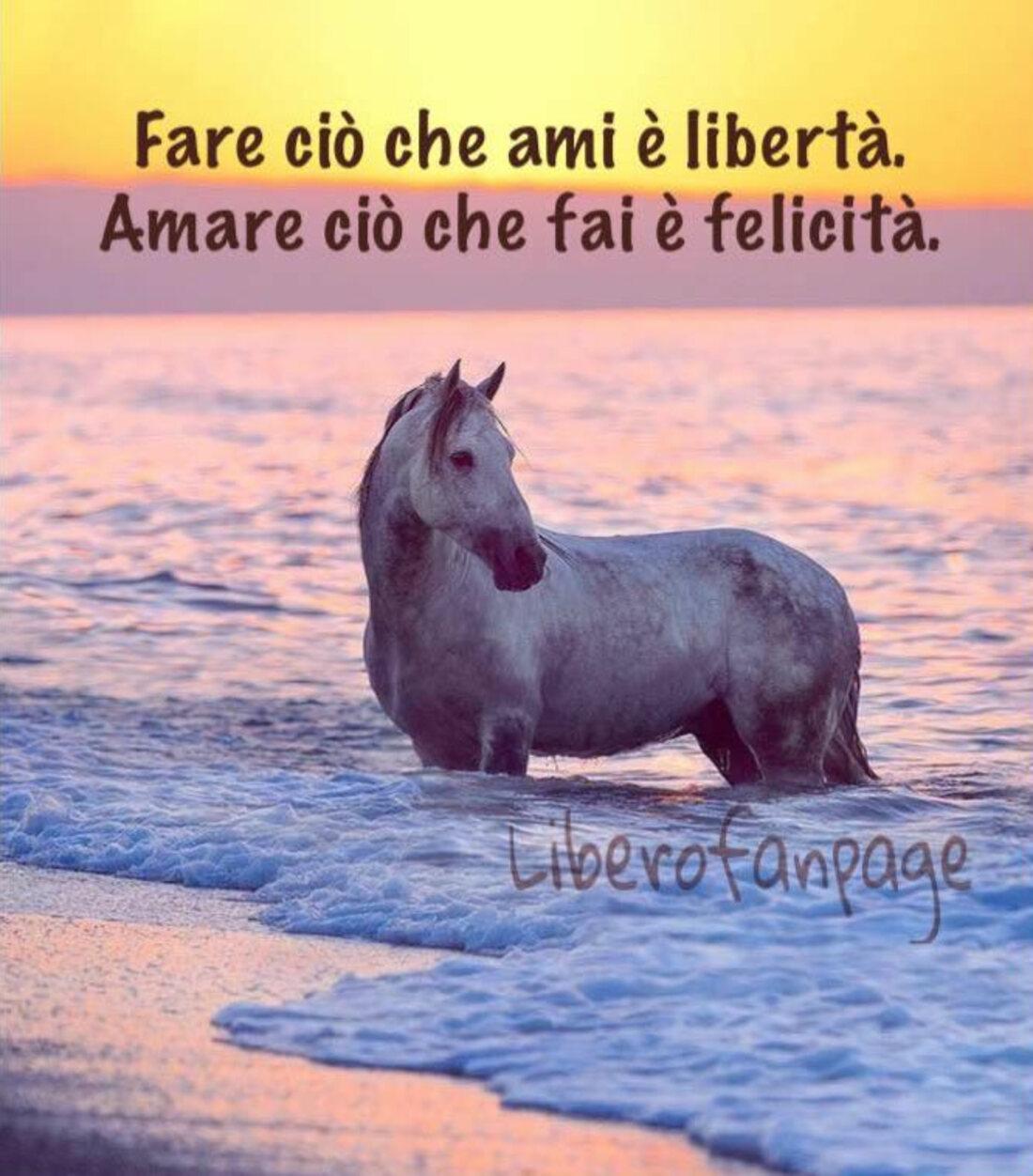 Fare ciò che ami è libertà. Amare ciò che fai è felicità.