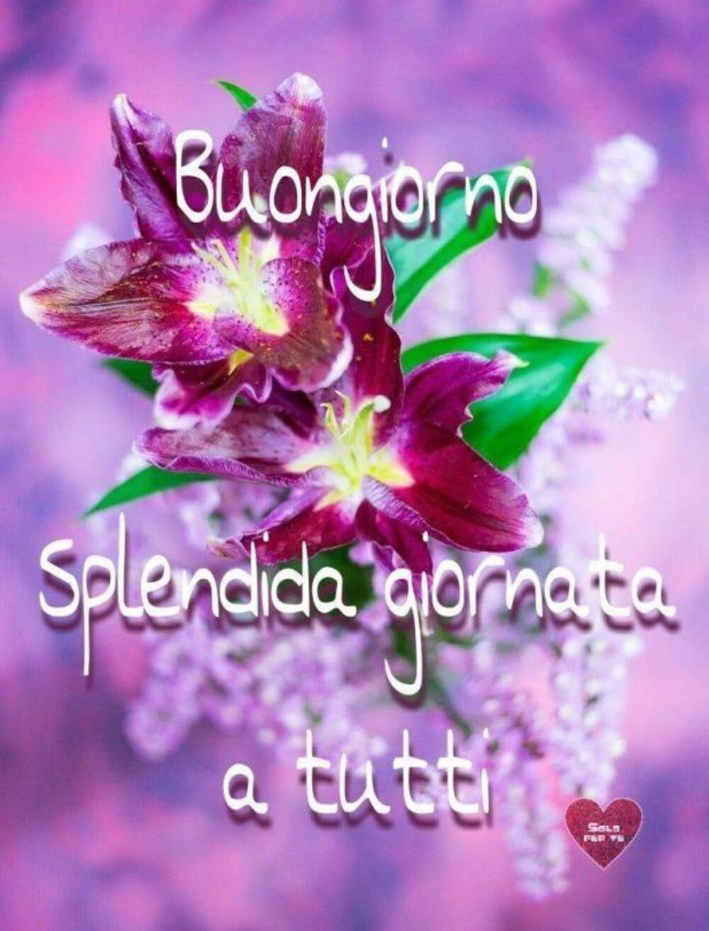 Buongiorno splendida giornata a tutti
