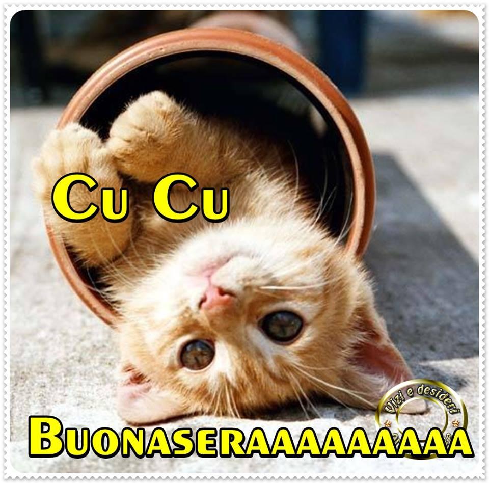 Cu Cu Buonaseraaaaaaaaa