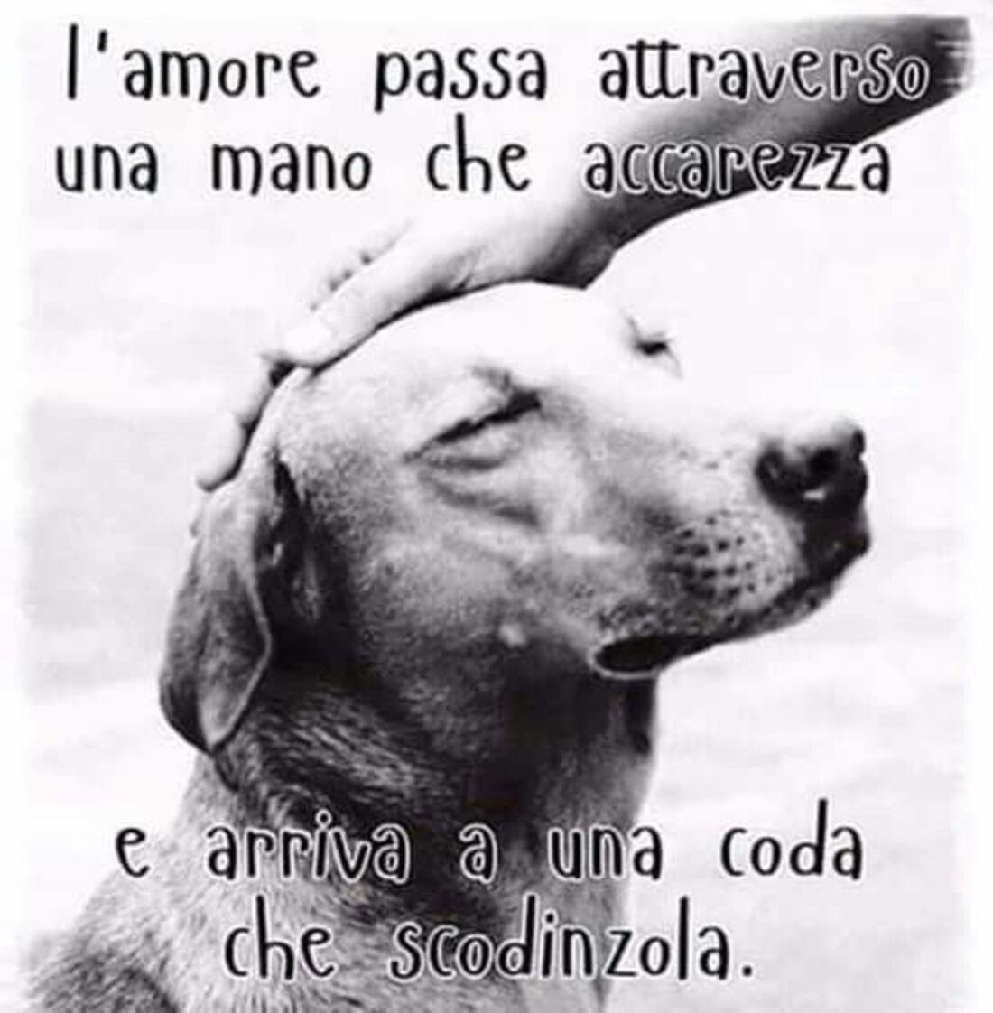 """""""L'amore passa attraverso una mano che accarezza e arriva ad una coda che scodinzola."""" - Frasi belle sui cani"""