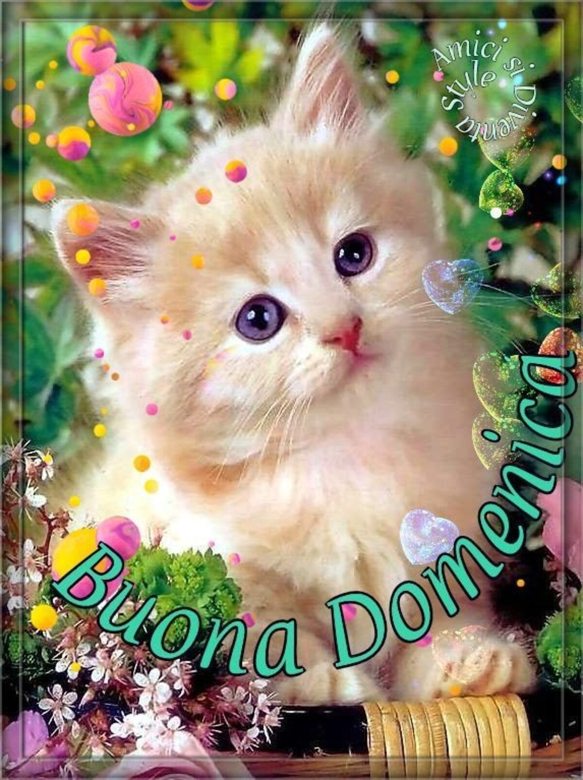 Buona Domenica gattino