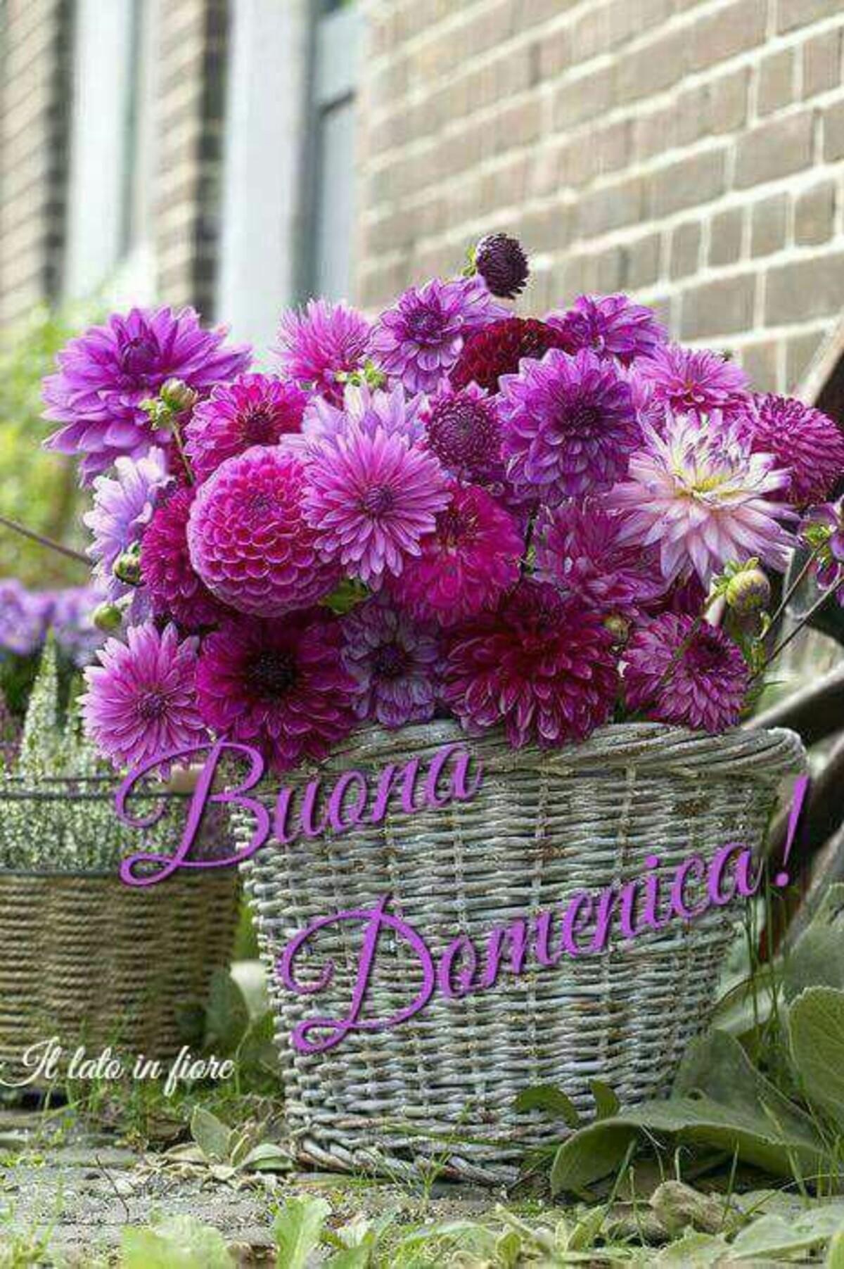 Buona Domenica con i fiori